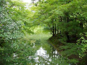 仙洞御所庭園の池